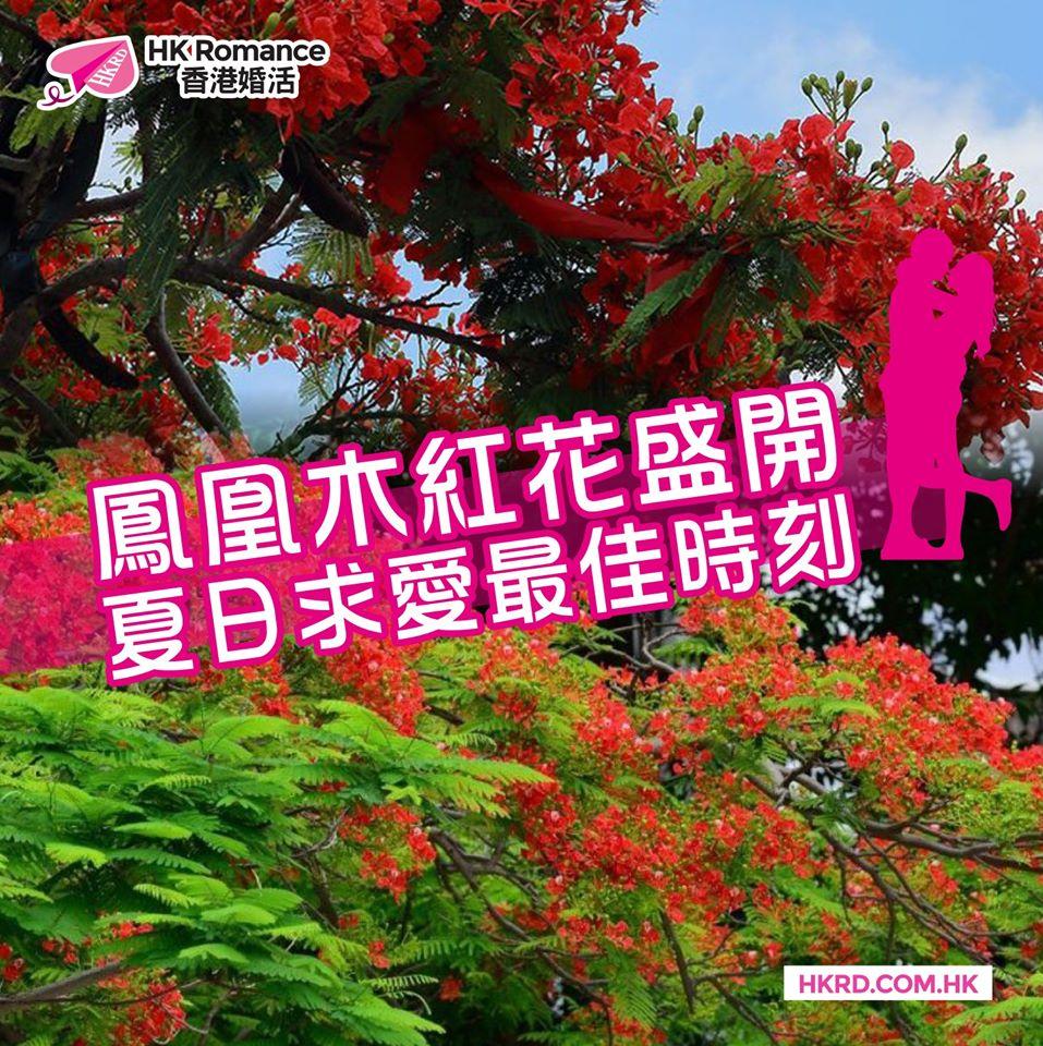 精選交友約會文章: 鳳凰木紅花盛開 夏日求愛最佳時刻